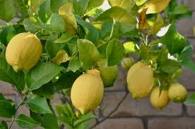 Natural Healing Room - Lemon 5 Fold Essential Oil