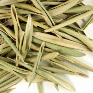 Natural Healing Room - Olive leaf (Olea europaea)