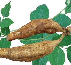 Natural Healing Room - Kudzu Root (Pueraria lobata)
