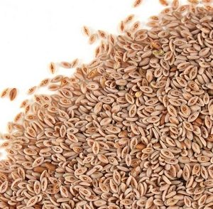 Natural Healing Room - Psyllium Seed  (Plantago asiatica)