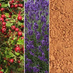 Berries, Flowers & Clays